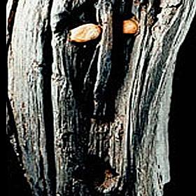 Ballachulish goddess 280x280_tcm4-553622